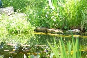 Wollen Sie einen Schlammsauger kaufen, sollten Sie die Größe Ihres Teichs berücksichtigen.