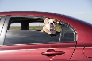 Auto-Hundedecke für die Rücksitzbank: Bei Ihrem Test sollten auf Anschnallmöglichkeiten für Ihren Hund achten.
