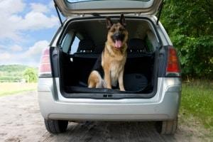 Wenn Sie eine Kofferraumwanne kaufen, können Sie darin allerhand transportieren, sogar Hunde.