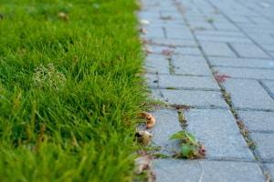 Wollen Sie eine saubere Rasenkante, sollten Sie sich einen Rasenkantenschneider kaufen.